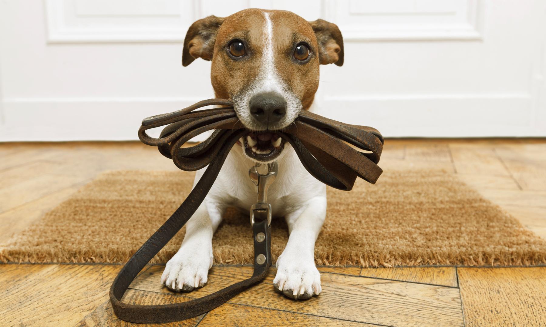 anschaffung-hund