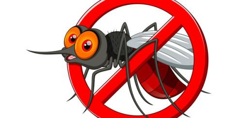Mosquitos-123inmueble1