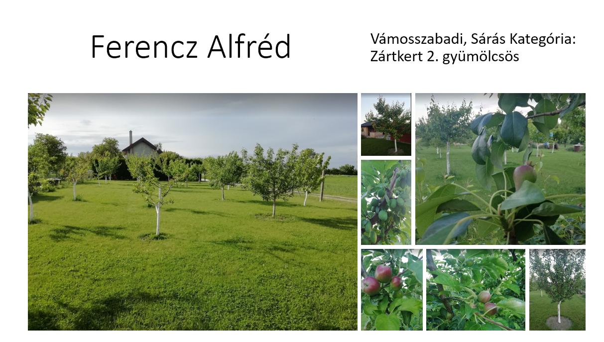 Ferenz Alfréd 3