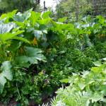 Az egészséges növények kevesebb vegyi növényvédelmet igényelnek. Ezt az állapotot a vetésforgók betartásával erősíthetjük.