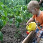 A megszerzett tudást és tapasztalatokat adjuk át másoknak. Főleg a fiatalokat vonjuk be a kertészkedés praktikáiba, hogy ne vesszen el ez az örökségünk.