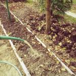 A növénytermesztés legfontosabb alapismerete mi más lehetne, mint a termőtalaj működésének ismerete. Ahhoz, hogy egy növény természetes körülmények között optimálisan fejlődjön, szüksége van szerves kötésű ásványi anyagokra, elegendő szabadon felvehető víztartalomra és pórusos, levegős talajra valamint őt segítő mikroorganizmusokra, amelyek vígan szaporodnak a fenti adottságoknak megfelelő talajban.