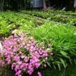 A növénytársítás lényege, hogy a növények mind fejlődésben, mind egymást segítő védelmi rendszerükben egymást kiegészítsék. Például a gyökér és szár zöldségeket is összepárosíthatjuk. Akkor kapunk szép termést, ha nem túl sűrűn ültetjük, és a termés mennyiségét is szabályozhatjuk.