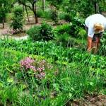 Az intenzív növénytársítás lényege, hogy az ültetés – szedés folyamatosan megvalósulhasson. Például az újhagyma, saláta, retek ágyás sorközeibe beültethetjük a paprika palántákat. Mire egy hónap alatt felhúzkodjuk a hónapos retket, zöldhagymát, addigra a paprika eléri a termőállapotot.